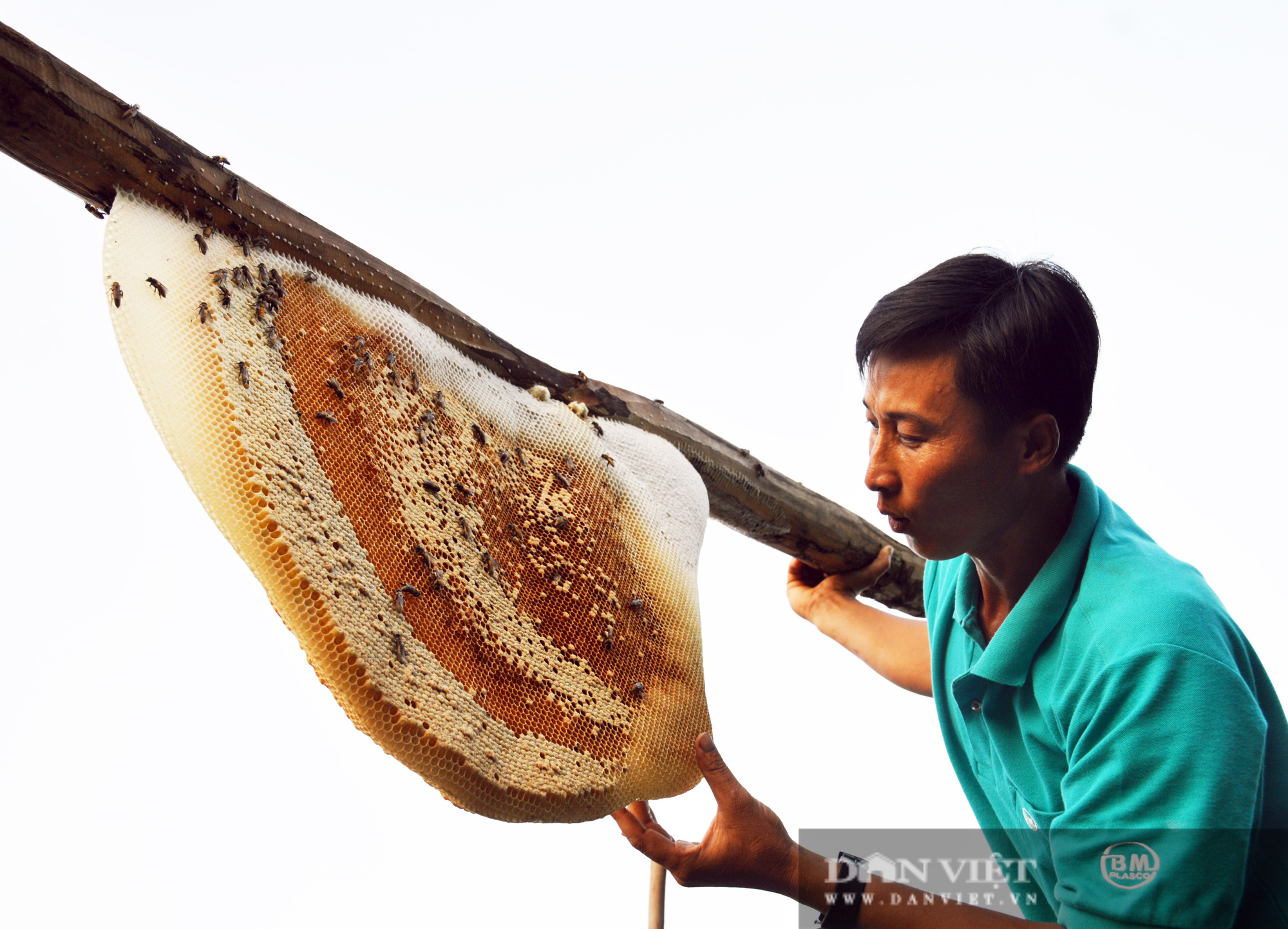 Điểm qua những món đặc sản từ nhộng ong, nhìn thì sợ nhưng ăn thì ghiền - Ảnh 8.