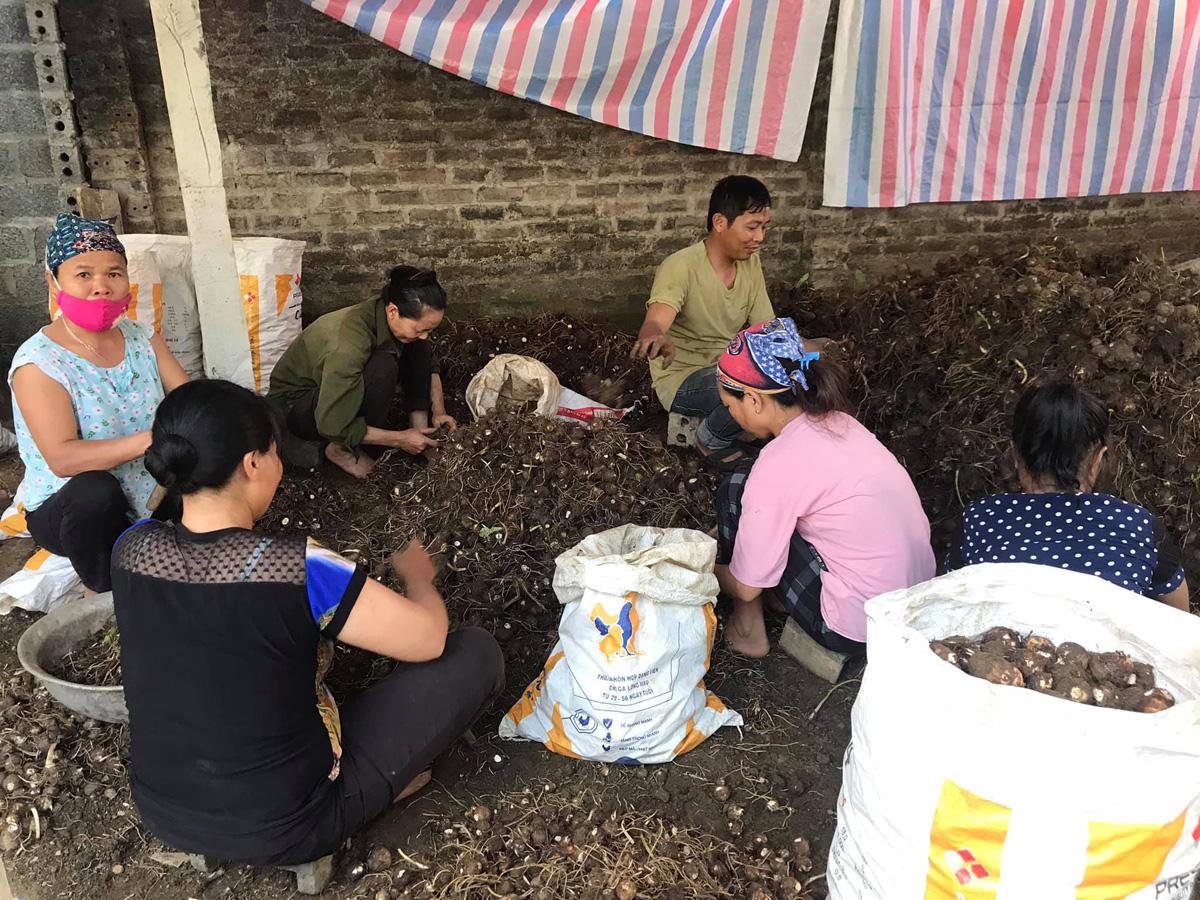 Hòa Bình: Đáng buồn, trồng bí trái to, khoai sọ đào lên hàng chục tấn, vì sao nông dân bấm bụng bán rẻ mạt? - Ảnh 1.