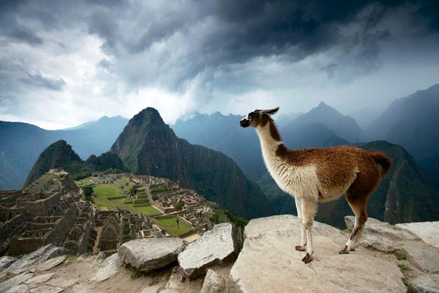 Vì sao người Inca xây thành Machu Picchu bằng đá không cần dùng vữa? - Ảnh 10.