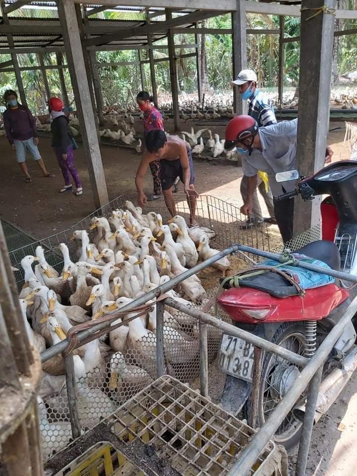 Giá gia cầm hôm nay 13/6: Giá vịt thịt miền Nam giảm,  gà công nghiệp mất mất 500 đồng/kg  - Ảnh 1.