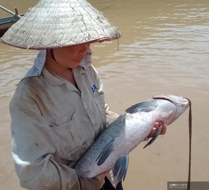 Sơn La: Nước sông Đà cạn đục ngầu, người dân vét lưới toàn được cá khủng - Ảnh 1.