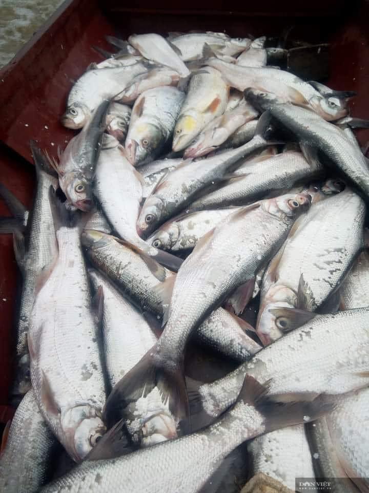 Sơn La: Nước sông Đà cạn đục ngầu, người dân vét lưới toàn được cá khủng - Ảnh 5.