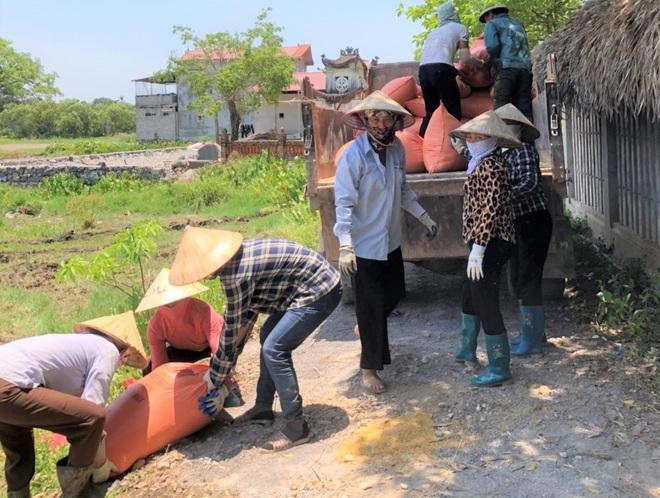 Ninh Bình: Nhân viên du lịch hái hoa sen, gặt lúa để có thêm thu nhập - Ảnh 2.