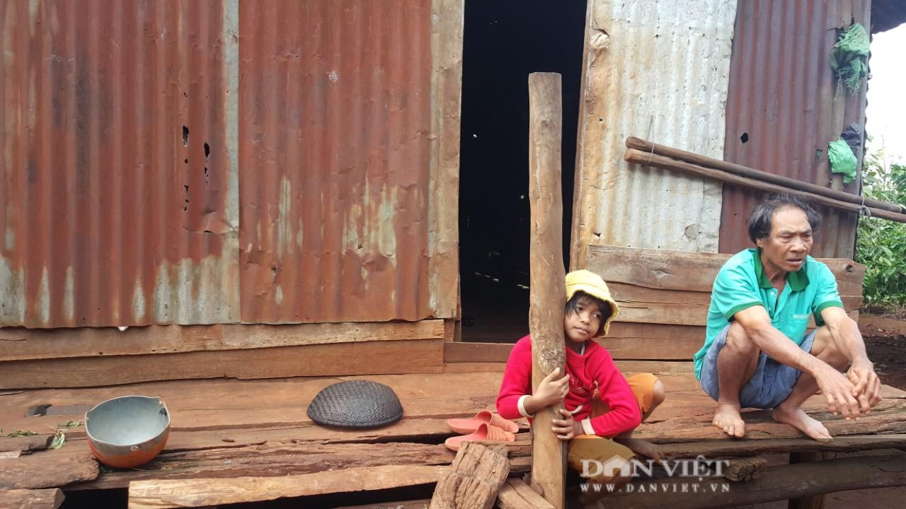 Đắk Lắk: Liên tục ngộ độc do ăn nấm rừng và thịt cóc - Ảnh 1.