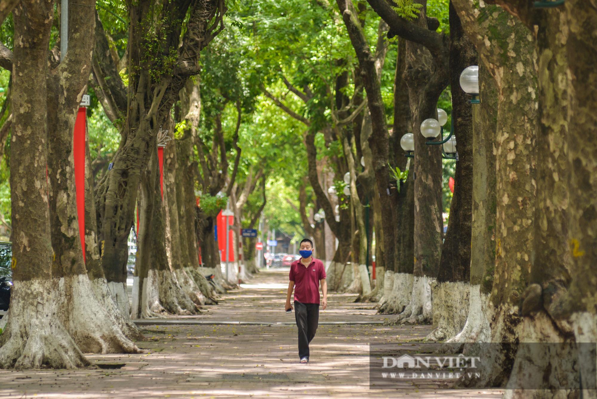 """Các tuyến đường Hà Nội hạ nhiệt trong ngày nóng nhờ """" dàn điều hòa xanh"""" - Ảnh 5."""