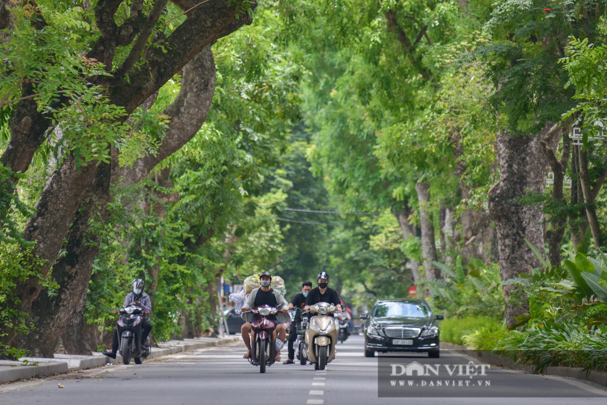 """Các tuyến đường Hà Nội hạ nhiệt trong ngày nóng nhờ """" dàn điều hòa xanh"""" - Ảnh 6."""