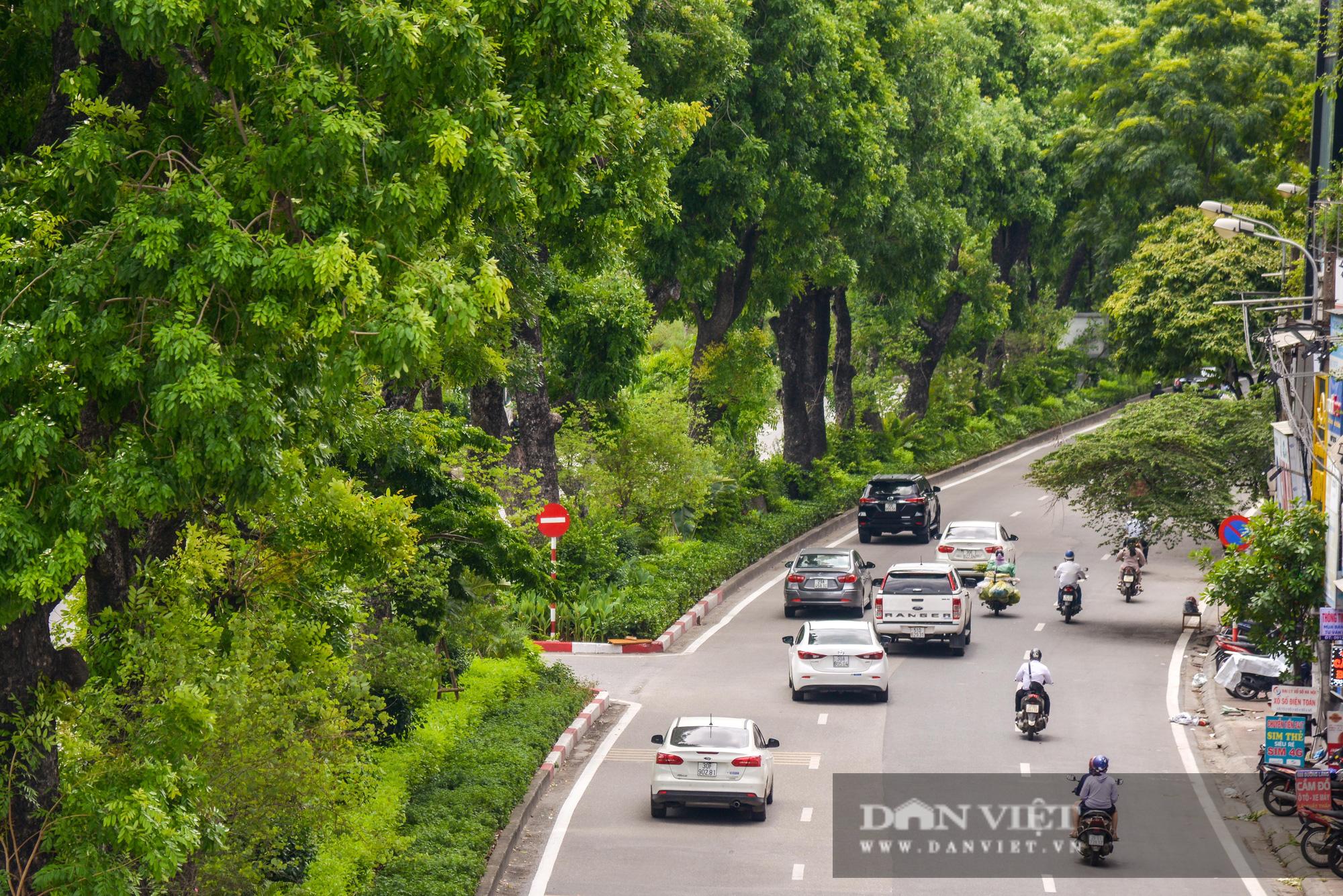 """Các tuyến đường Hà Nội hạ nhiệt trong ngày nóng nhờ """" dàn điều hòa xanh"""" - Ảnh 12."""