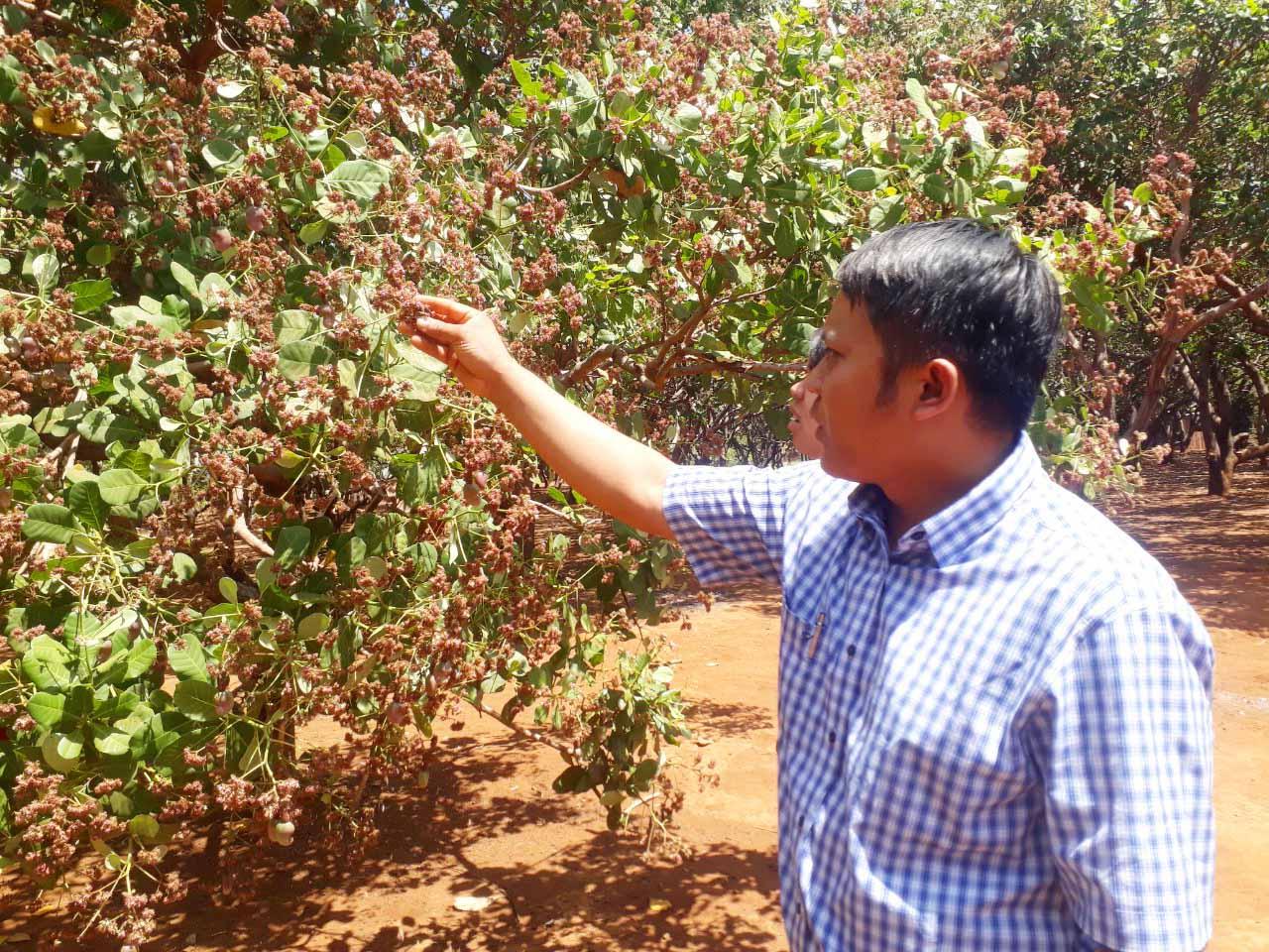 Nhập khẩu một lượng khổng lồ khiến giá loại nông sản này của Việt Nam giảm sâu dù Mỹ mua nhiều - Ảnh 1.
