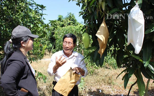 Nông dân trồng xoài ở Cù Lao Giêng (An Giang). Ảnh Nguyễn Vy
