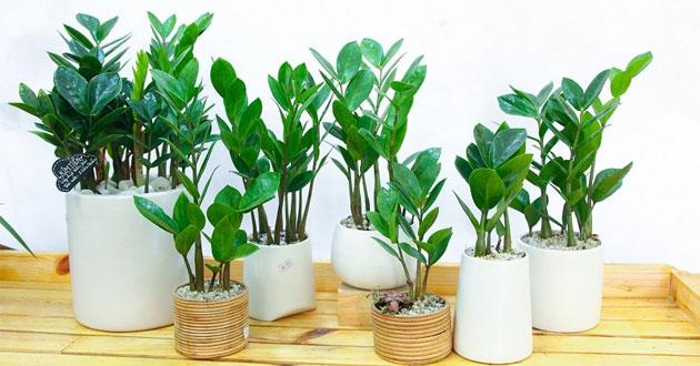 Bật mí loài cây phong thủy sẽ mang lại may mắn, thịnh vượng cho 12 con giáp - Ảnh 1.