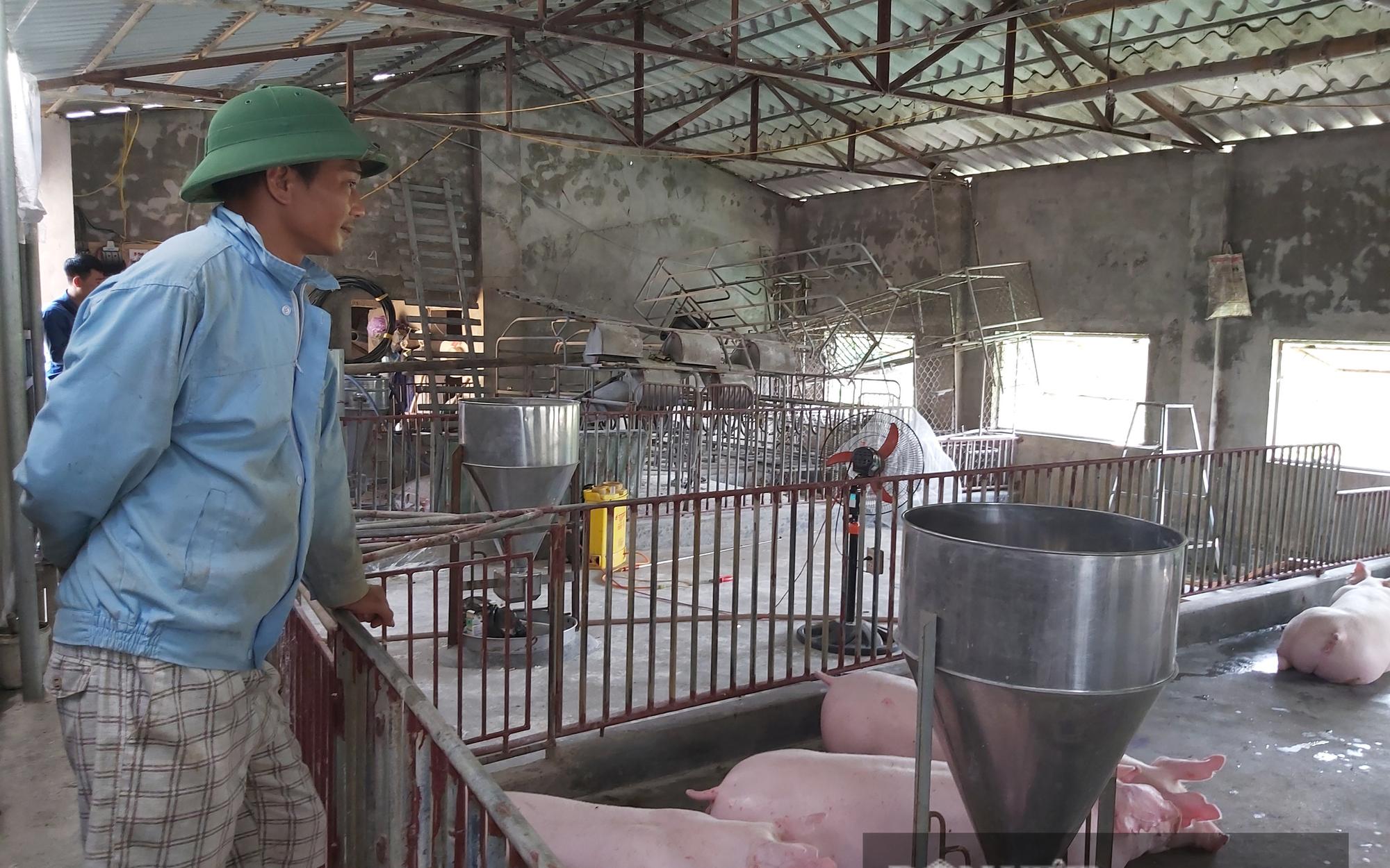 Giá lợn hơi rẻ nhất trong 2 năm, nhiều hộ nuôi lợn không dám tái đàn