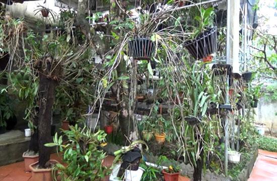 Thanh Hóa: Trồng hoa phong lan rừng, treo đầy nhà, sơn nữ còn mong muốn điều ai nghe cũng bất ngờ - Ảnh 3.
