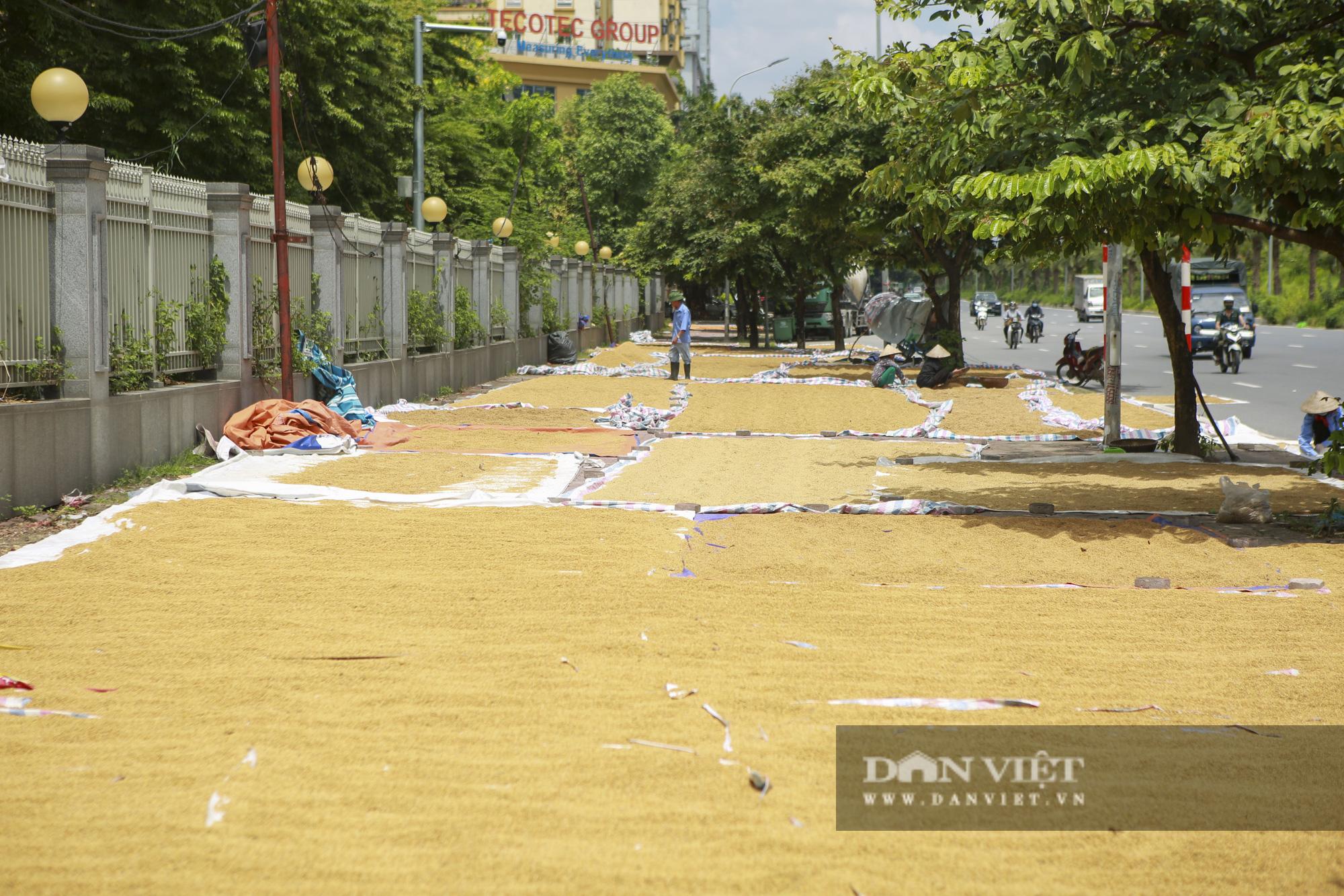 Hà Nội: Nông dân bất lực nhìn lúa mọc mầm vì mưa liên tiếp - Ảnh 1.
