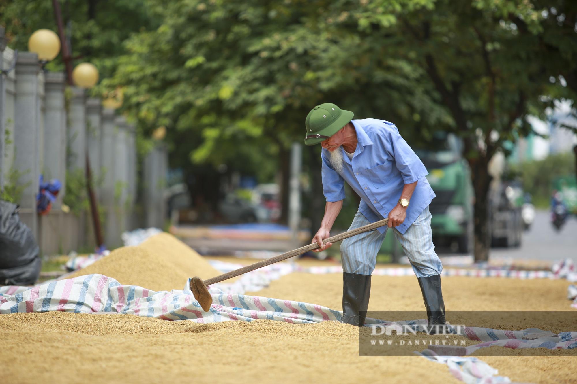 Hà Nội: Nông dân bất lực nhìn lúa mọc mầm vì mưa liên tiếp - Ảnh 4.