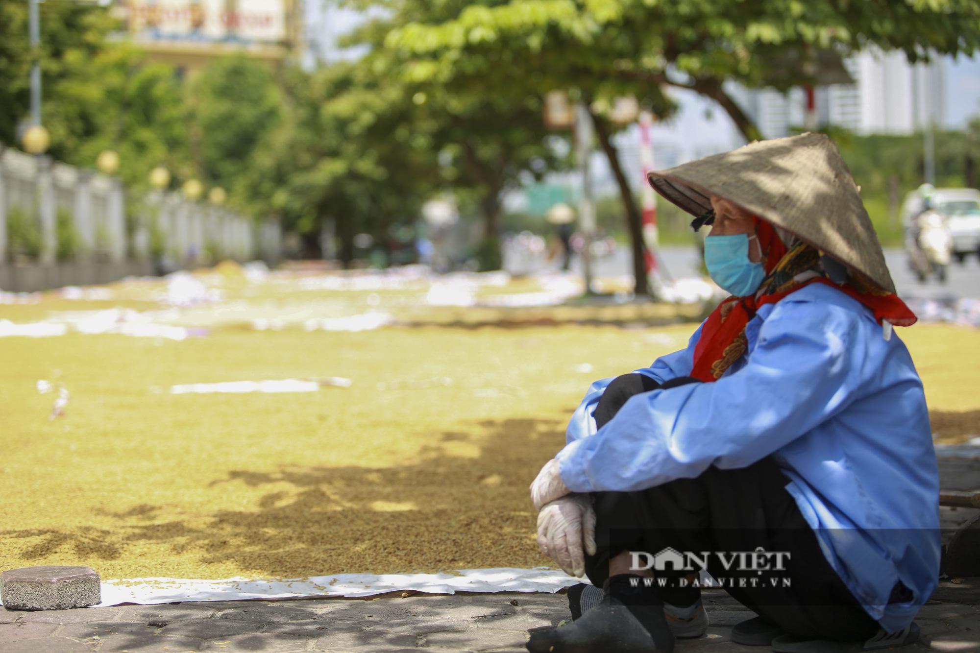 Hà Nội: Nông dân bất lực nhìn lúa mọc mầm vì mưa liên tiếp - Ảnh 7.