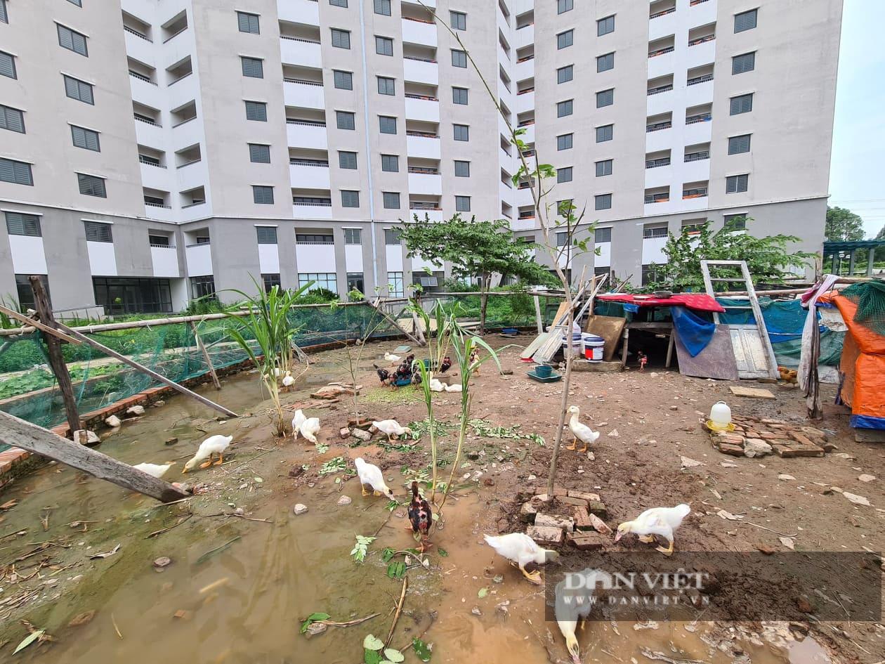 Xót xa cảnh nhà tái định cư ở Hà Nội xây xong rồi bỏ không - Ảnh 3.