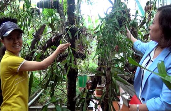 Thanh Hóa: Trồng hoa phong lan rừng, treo đầy nhà, sơn nữ còn mong muốn điều ai nghe cũng bất ngờ - Ảnh 4.