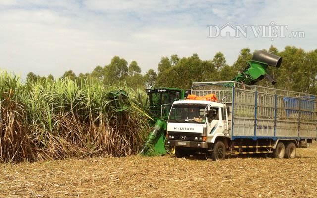 VSSA nhận định đường nhập lậu khiến cho một loạt các nhà máy đường trong nước đã phải đóng cửa, tác động nghiêm trọng đến việc làm của người lao động. Ảnh Nguyên Vỹ