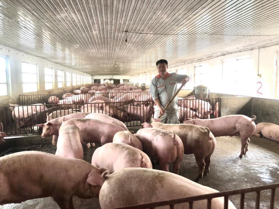 """Nông dân nuôi gà, lợn điêu đứng vì giá thức ăn chăn nuôi tăng vù vù, các """"ông lớn"""" vẫn thu lãi khủng - Ảnh 3."""