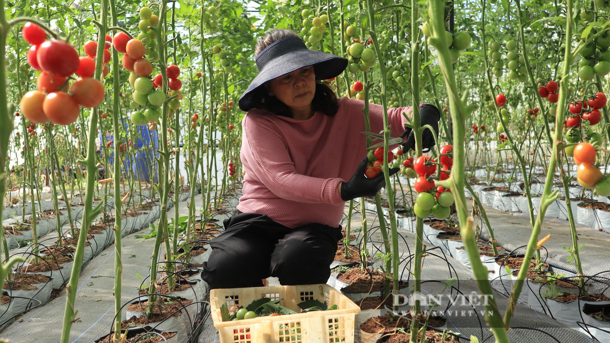 """Lâm Đồng: Giá thuê đất nông nghiệp """"trên trời"""" khiến nhà đầu tư """"e ngại"""" - Ảnh 1."""
