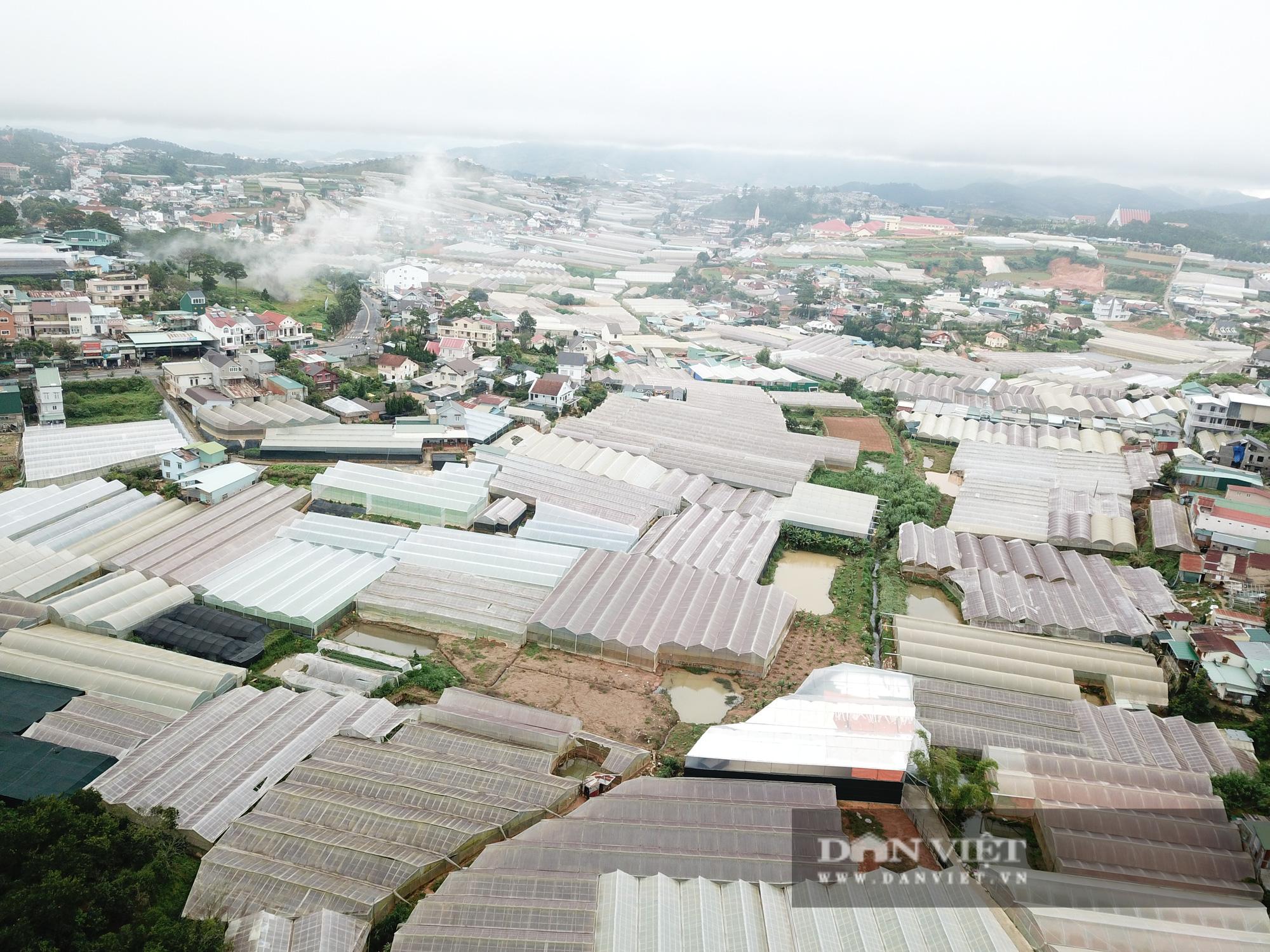 """Lâm Đồng: Giá thuê đất nông nghiệp """"trên trời"""" khiến nhà đầu tư """"e ngại"""" - Ảnh 3."""