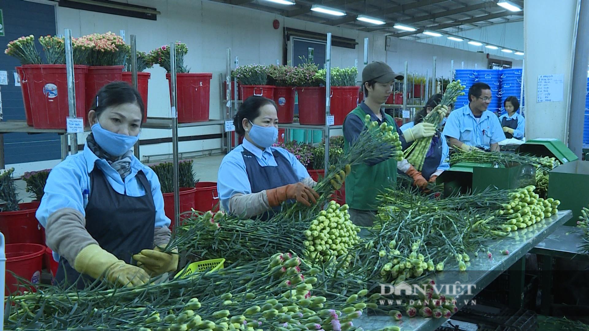 """Lâm Đồng: Giá thuê đất nông nghiệp """"trên trời"""" khiến nhà đầu tư """"e ngại"""" - Ảnh 4."""