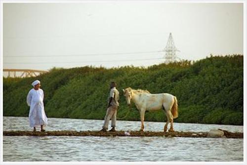 Những cư dân nổi tiếng bên bờ sông Nile Xanh của bộ tộc Mahas - Ảnh 6.