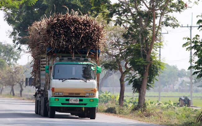 Xe tải chở mía mới thu hoạch về nhà máy ở Thái Lan. Ảnh BangkokPost