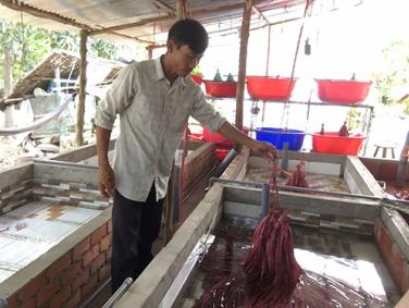 """Tiền Giang: Nuôi lươn không bùn trong bể xi măng, mỗi năm anh nông dân này """"đút túi"""" 800 triệu đồng - Ảnh 1."""