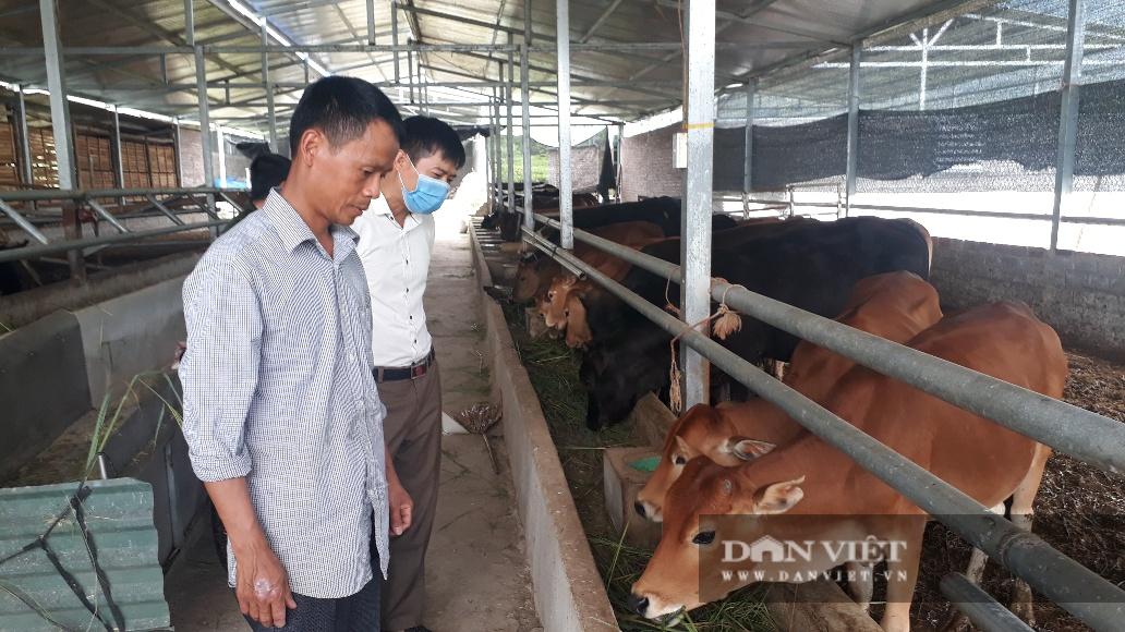 Lai Châu: Ông nông dân này dùng cách gì mà nuôi mấy chục con bò nhưng chỉ cần dọn chuồng 1 lần/năm? - Ảnh 1.