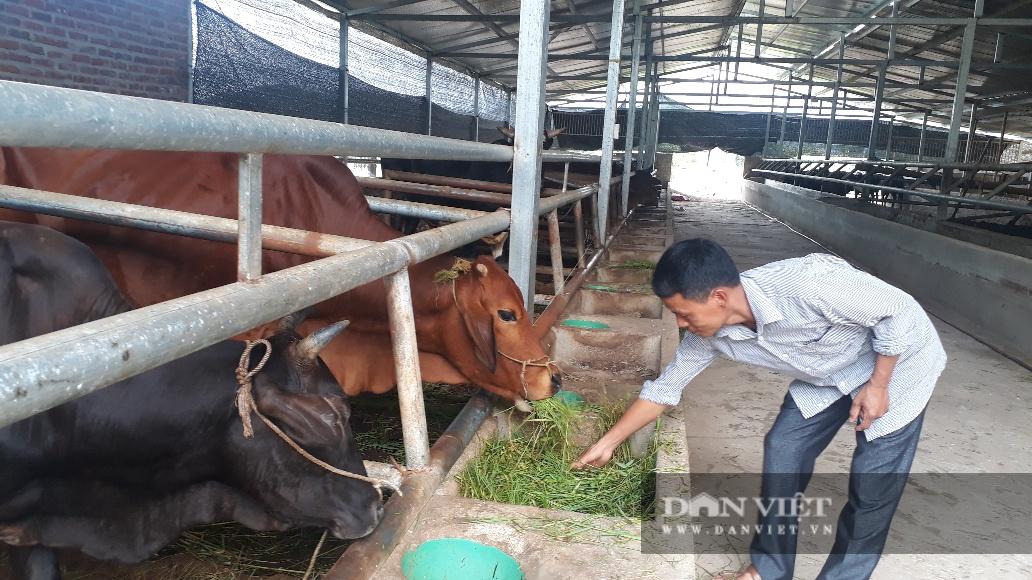 Lai Châu: Ông nông dân này dùng cách gì mà nuôi mấy chục con bò nhưng chỉ cần dọn chuồng 1 lần/năm? - Ảnh 2.
