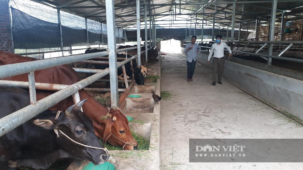 Lai Châu: Ông nông dân này dùng cách gì mà nuôi mấy chục con bò nhưng chỉ cần dọn chuồng 1 lần/năm? - Ảnh 4.