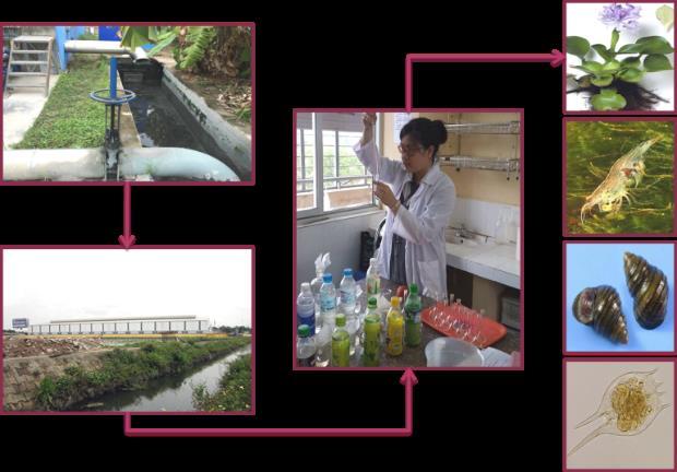 Giới thiệu về Ngành Công nghệ kỹ thuật môi trường - Ảnh 3.