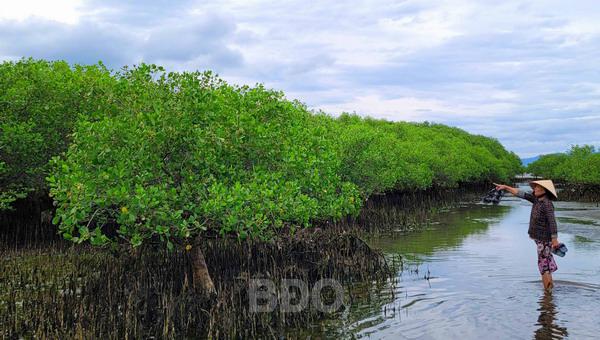 Bình Định: Ra rừng ngập mặn này chỉ cần nghe cá đớp nước đã thấy sung sướng trong lòng - Ảnh 1.