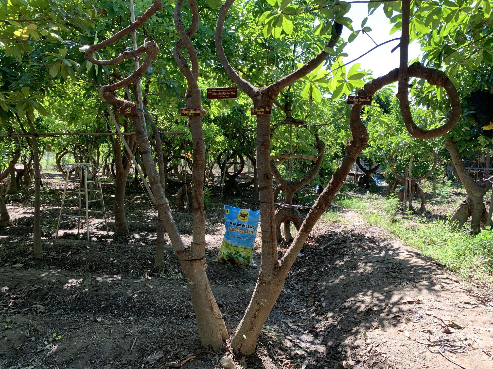 Người nông dân Ninh Thuận mang triết lý Phật giáo vào vườn cây - Ảnh 2.