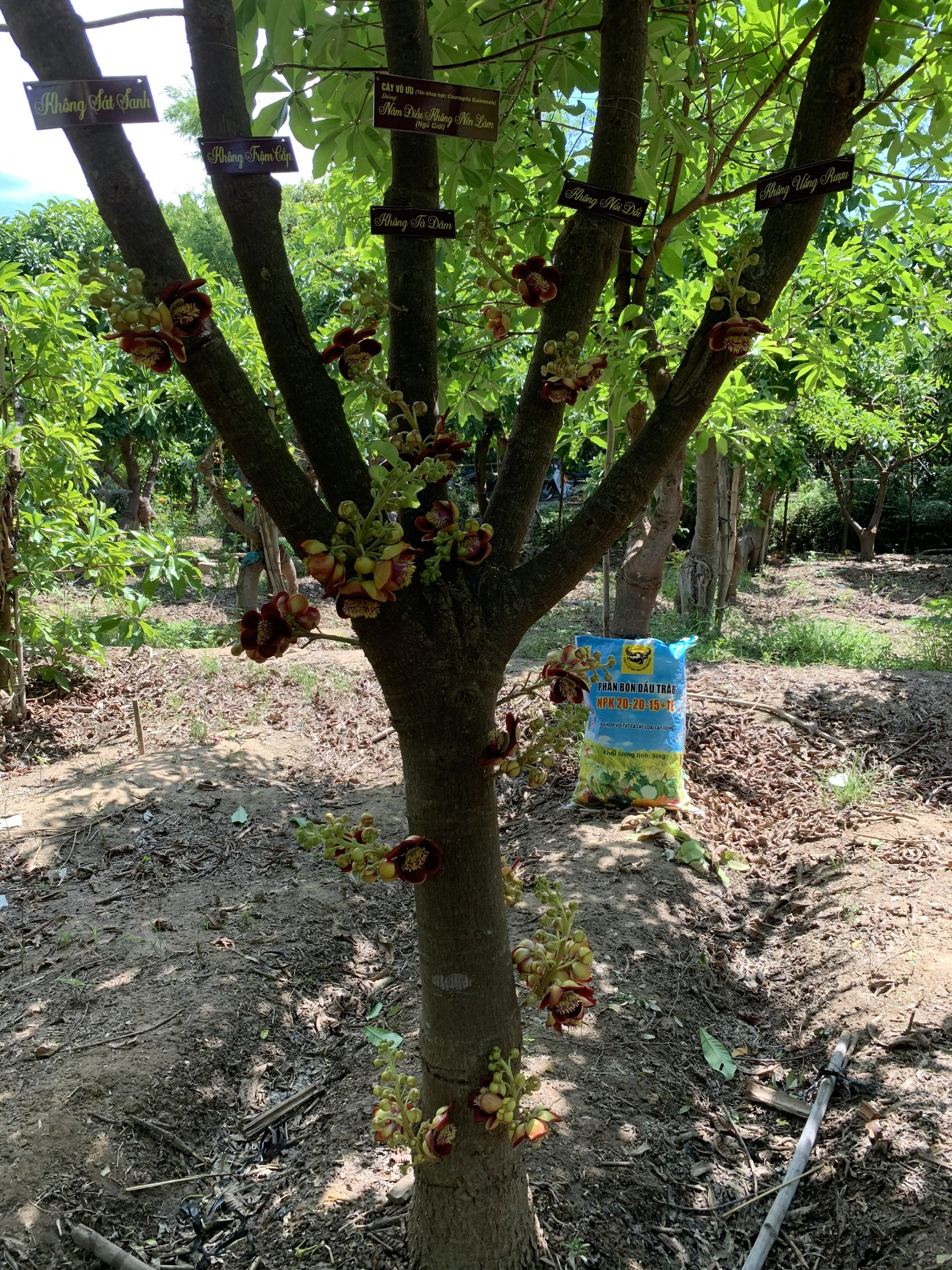 Người nông dân Ninh Thuận mang triết lý Phật giáo vào vườn cây - Ảnh 3.