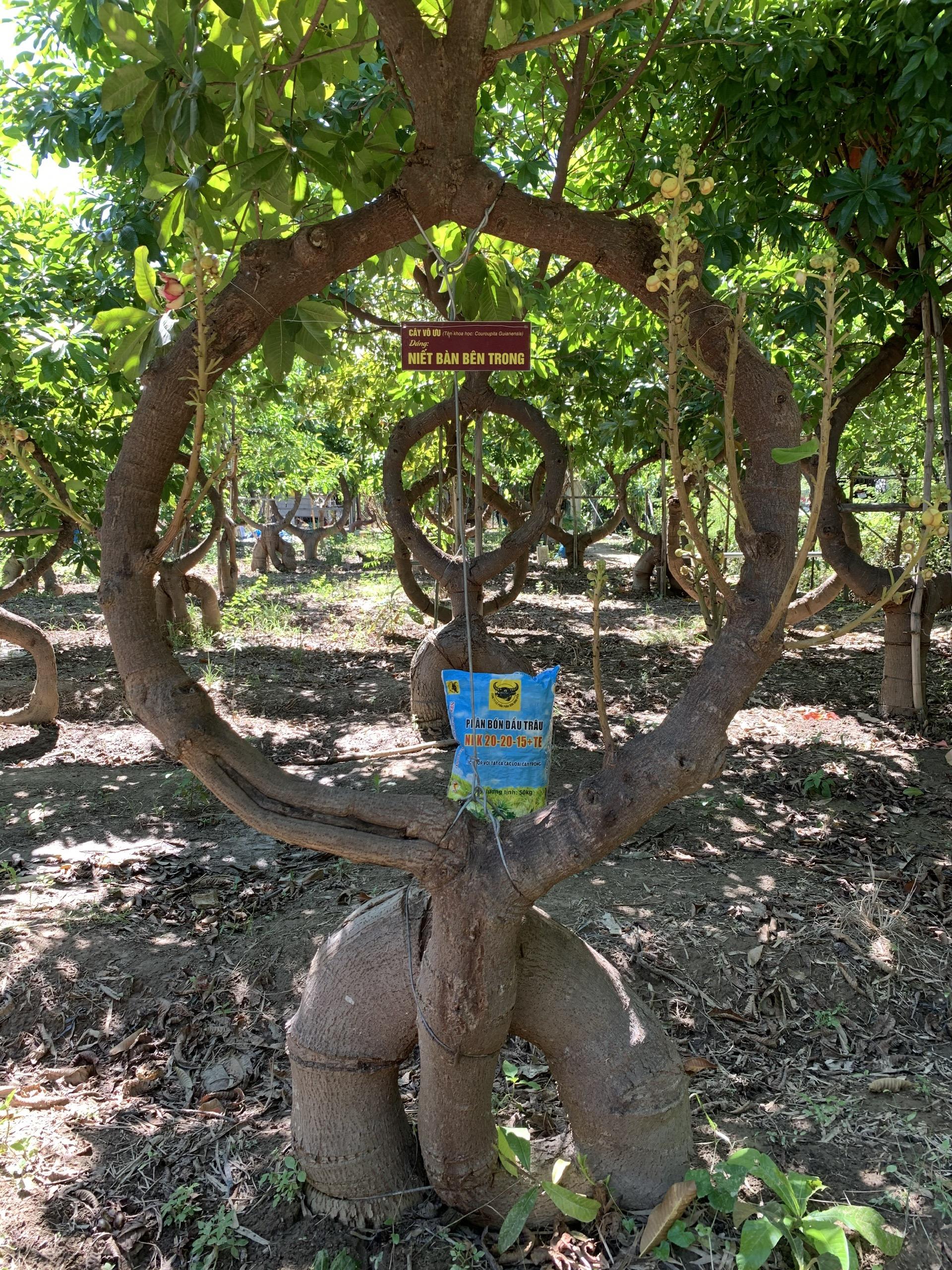 Người nông dân Ninh Thuận mang triết lý Phật giáo vào vườn cây - Ảnh 4.