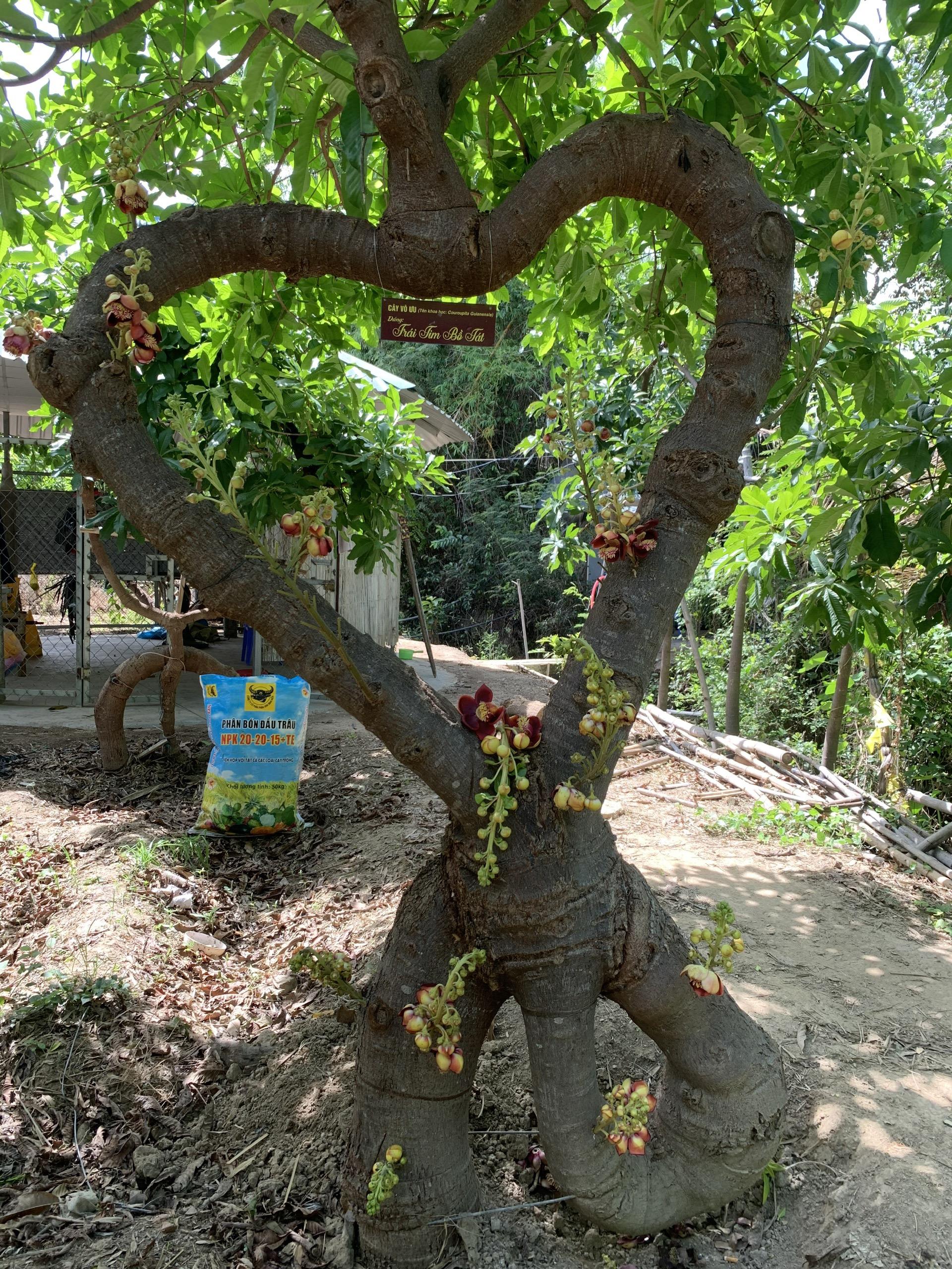 Người nông dân Ninh Thuận mang triết lý Phật giáo vào vườn cây - Ảnh 5.