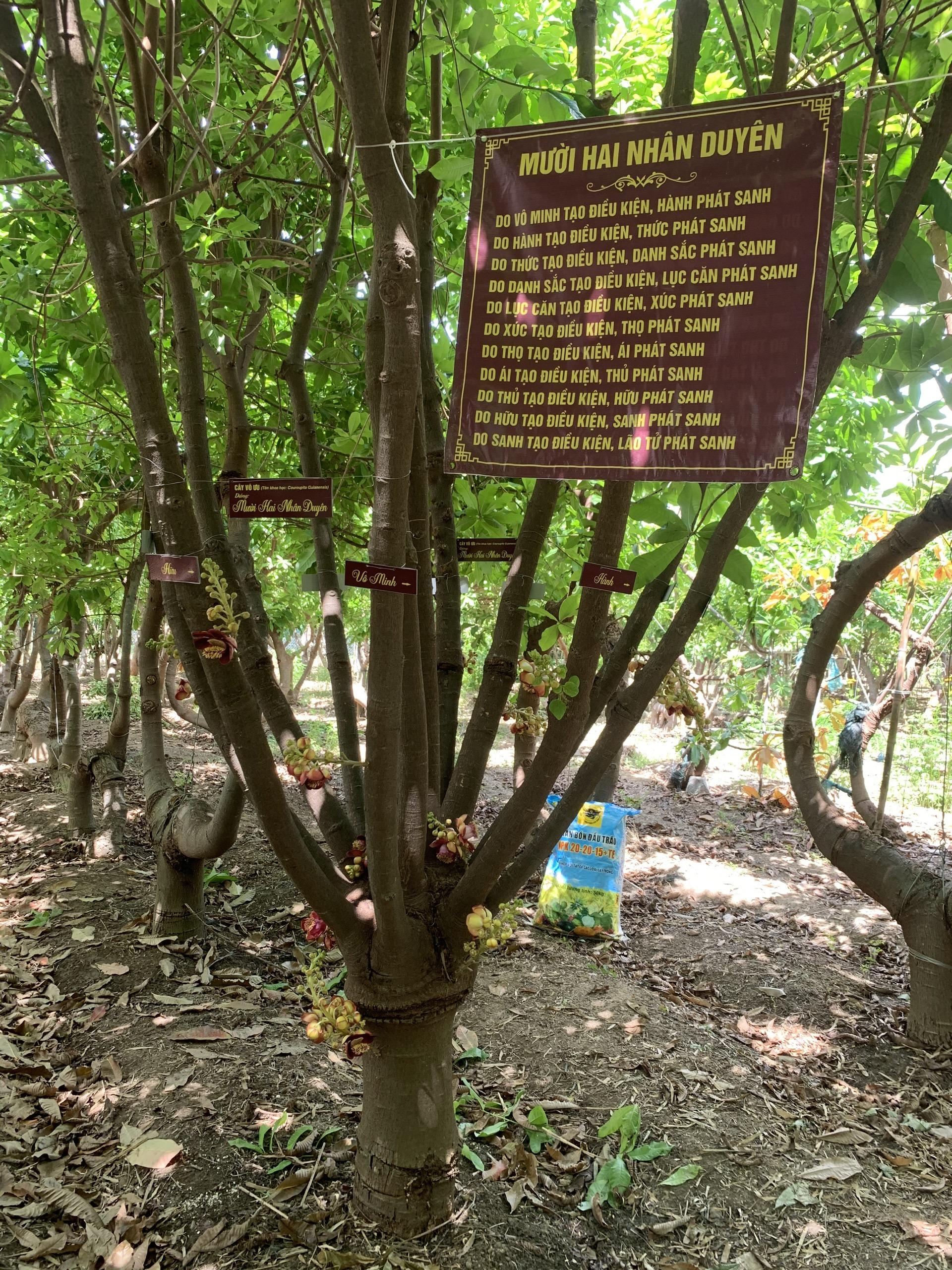 Người nông dân Ninh Thuận mang triết lý Phật giáo vào vườn cây - Ảnh 6.