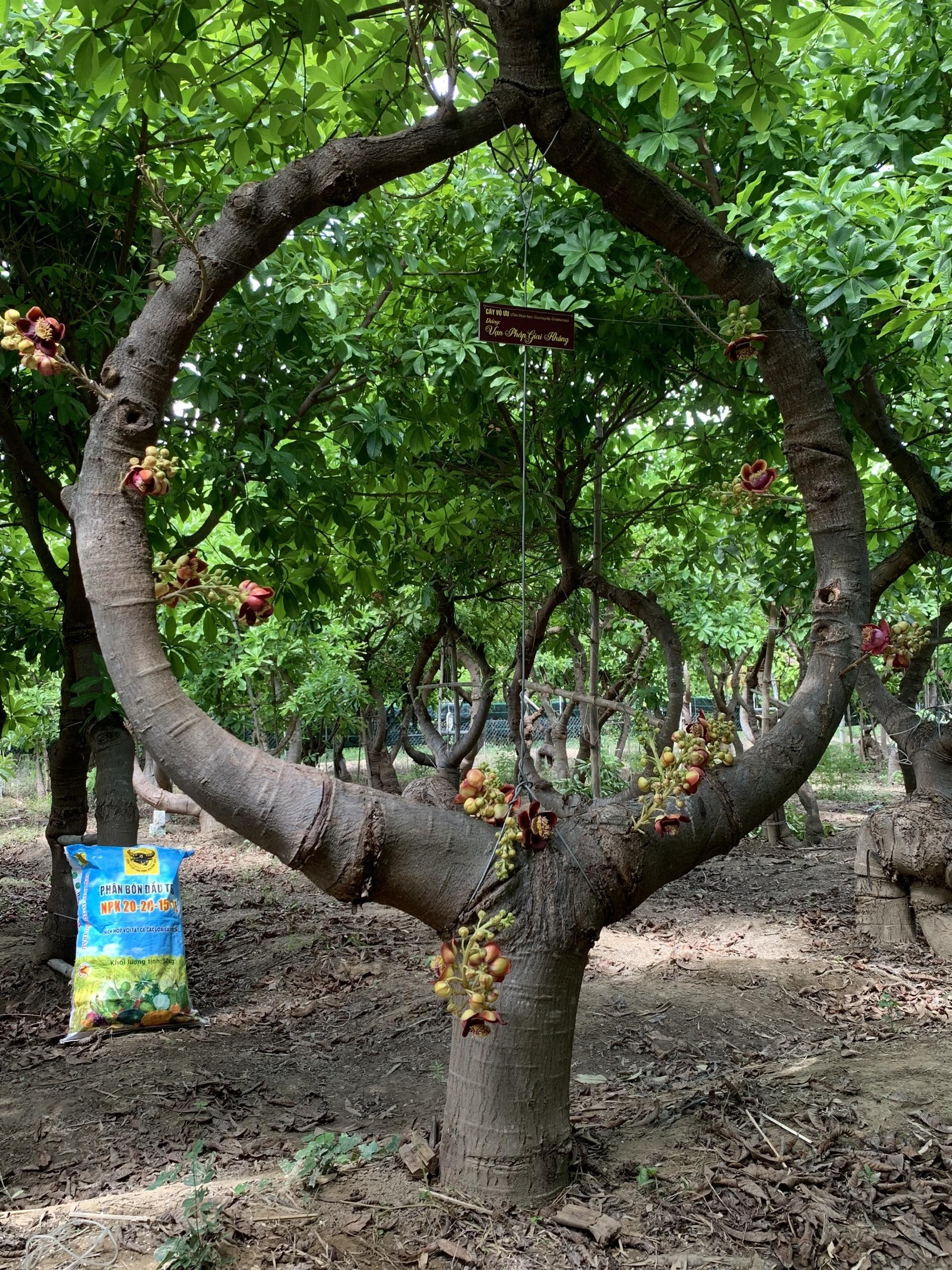 Người nông dân Ninh Thuận mang triết lý Phật giáo vào vườn cây - Ảnh 7.