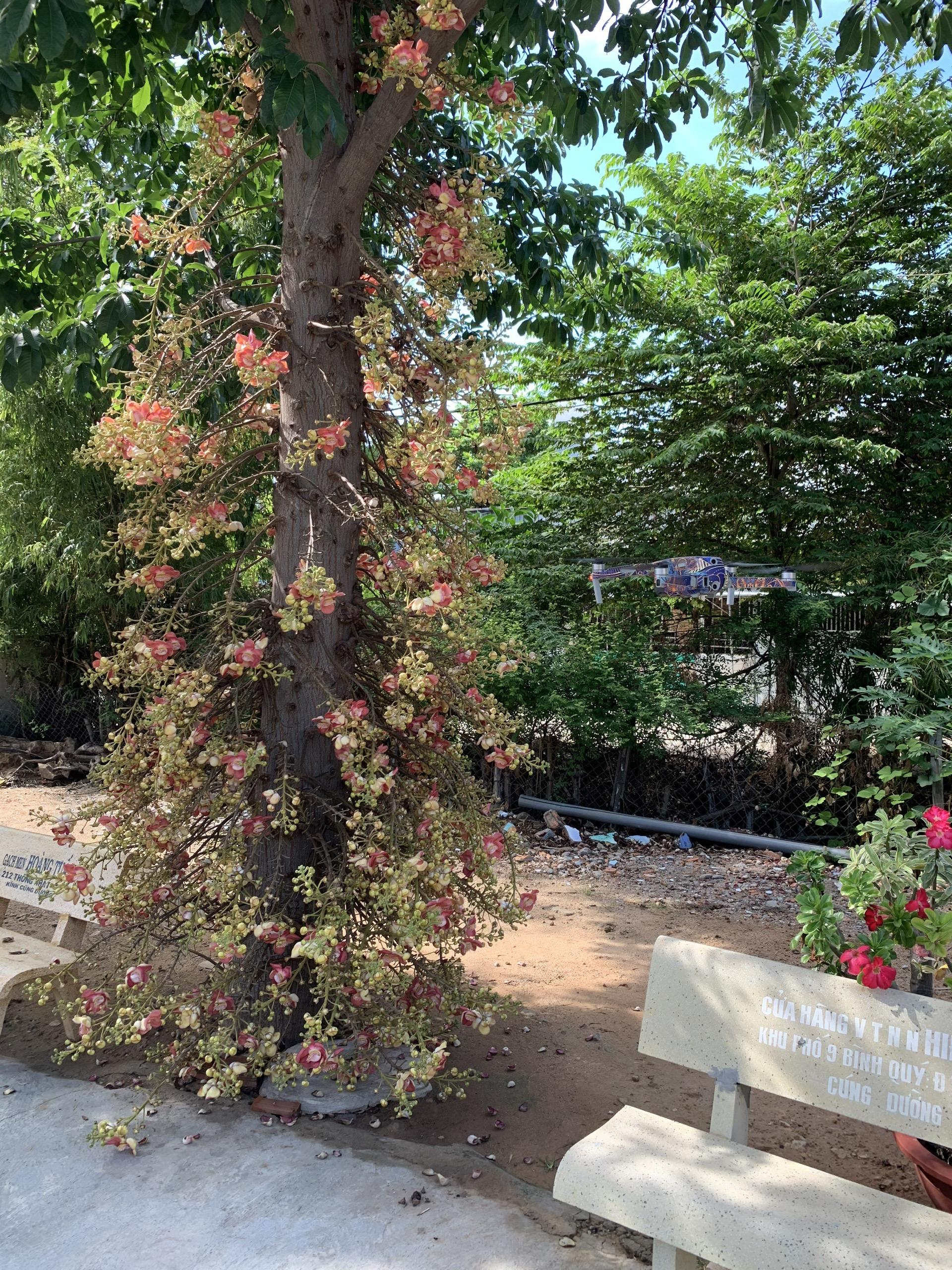 Người nông dân Ninh Thuận mang triết lý Phật giáo vào vườn cây - Ảnh 9.