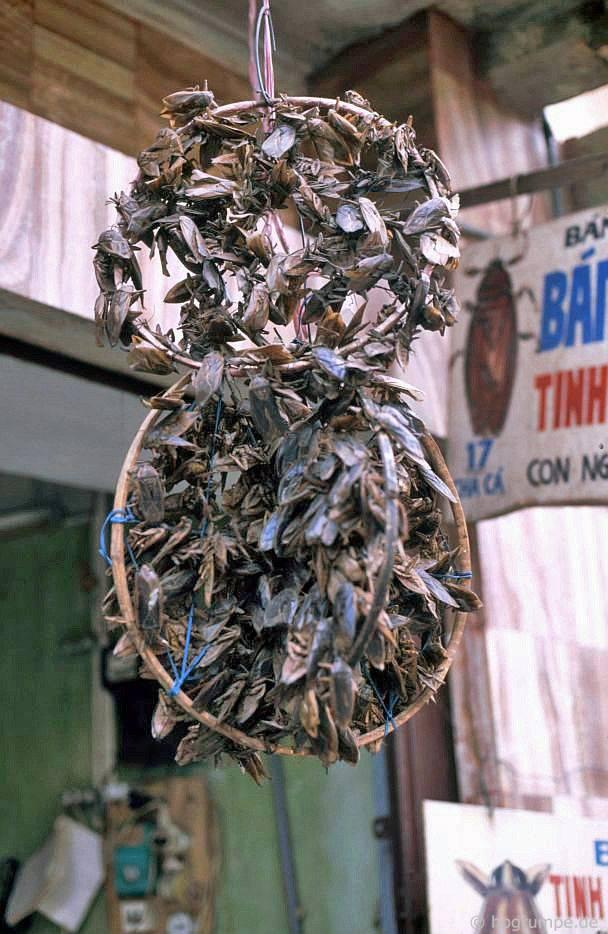 Kỳ thú ẩm thực vỉa hè ở Hà Nội năm 1991-1992 - Ảnh 11.
