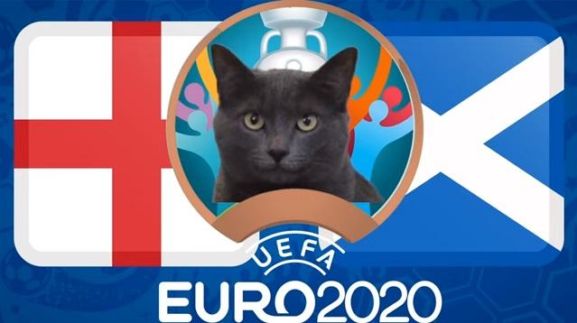 """Mèo """"tiên tri Cass"""" dự đoán tỷ số Anh vs Scotland - Ảnh 1."""
