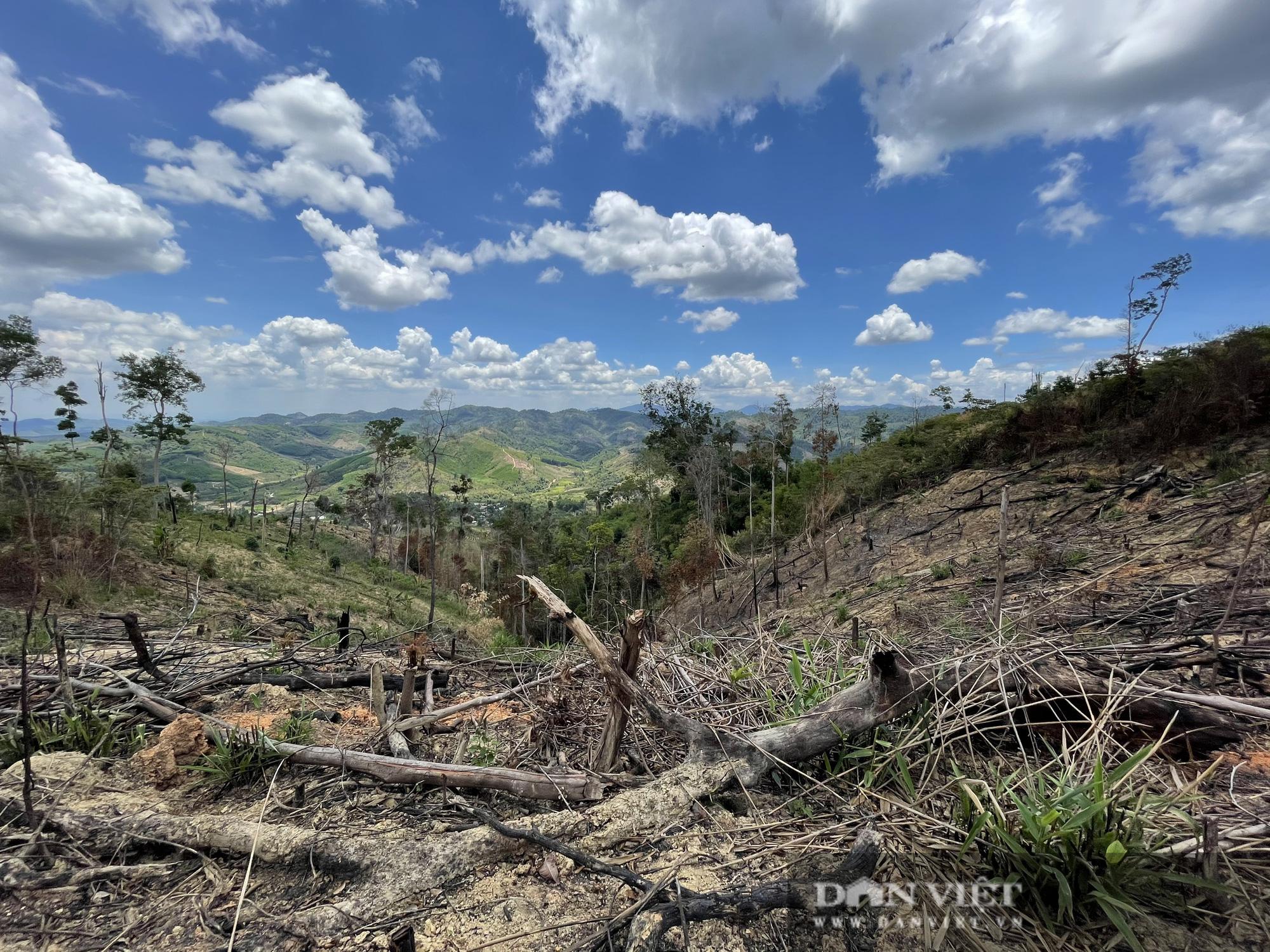Công ty lâm nghiệp Krông Bông (Đắk Lắk): Rừng bị phá tan hoang, lãnh đạo mất đoàn kết  - Ảnh 1.