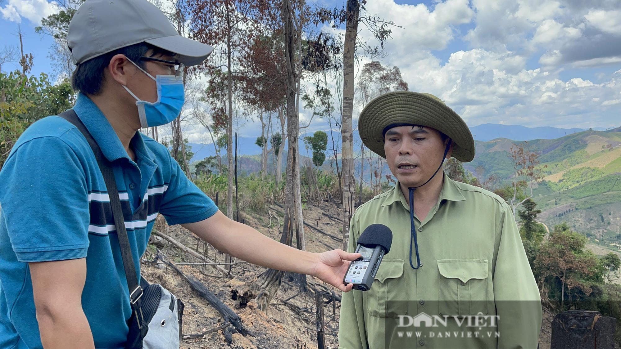 Công ty lâm nghiệp Krông Bông (Đắk Lắk): Rừng bị phá tan hoang, lãnh đạo mất đoàn kết  - Ảnh 3.