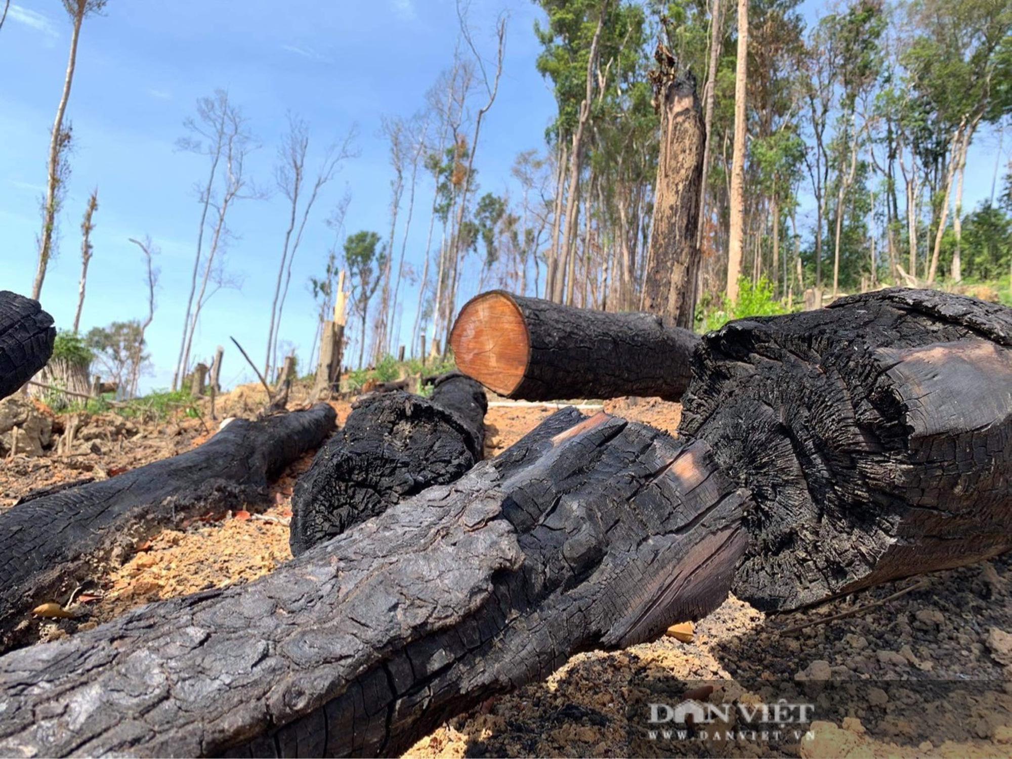 Công ty lâm nghiệp Krông Bông (Đắk Lắk): Rừng bị phá tan hoang, lãnh đạo mất đoàn kết  - Ảnh 6.