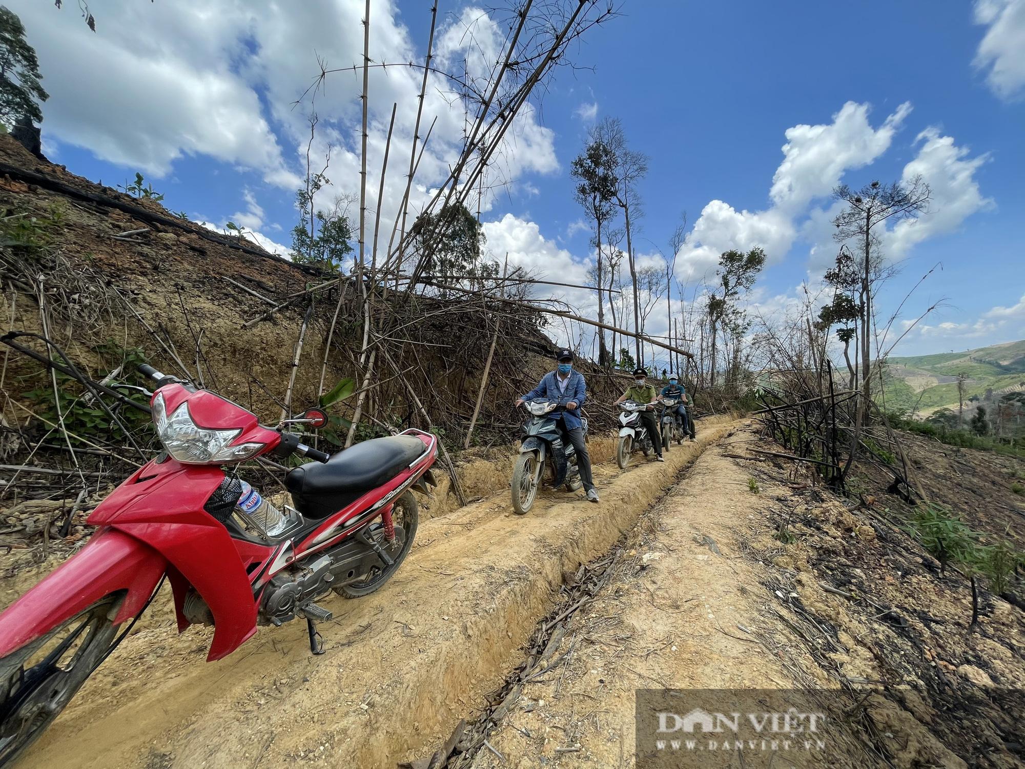 Công ty lâm nghiệp Krông Bông (Đắk Lắk): Rừng bị phá tan hoang, lãnh đạo mất đoàn kết  - Ảnh 7.