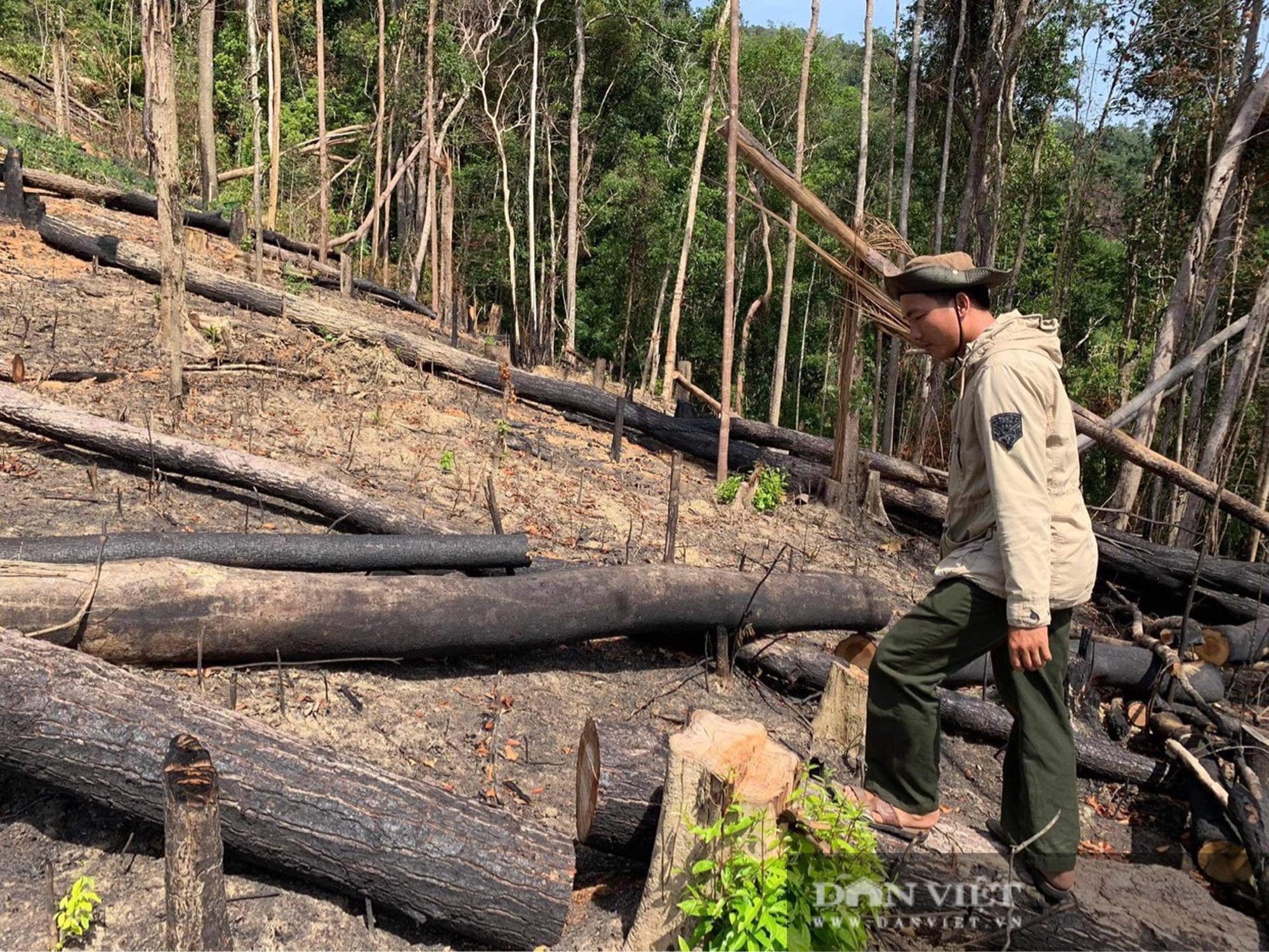 Công ty lâm nghiệp Krông Bông (Đắk Lắk): Rừng bị phá tan hoang, lãnh đạo mất đoàn kết  - Ảnh 8.