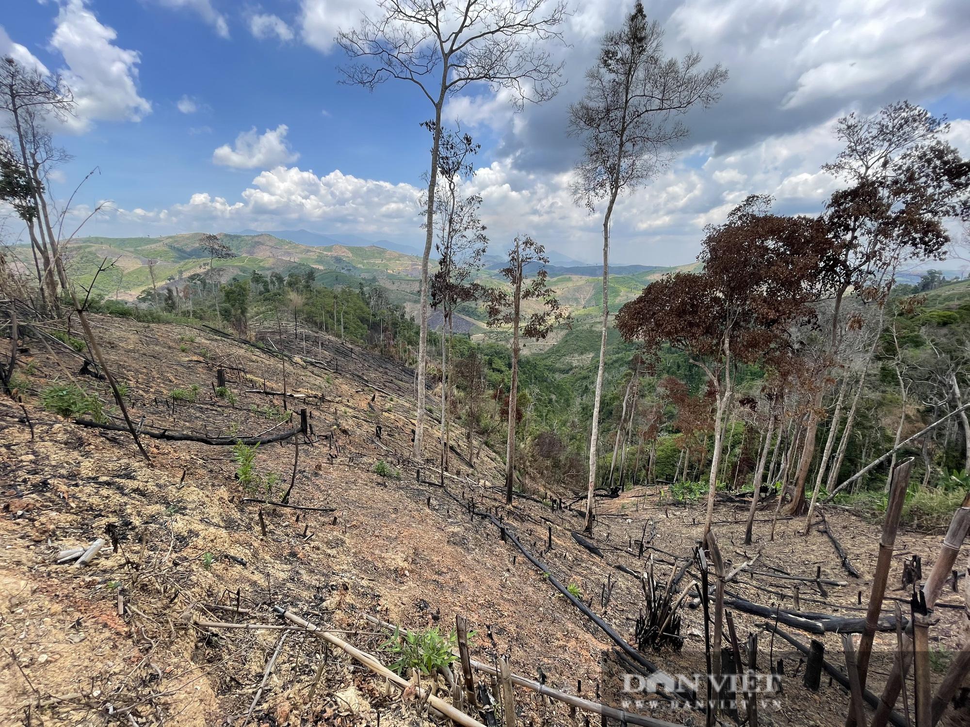 Công ty lâm nghiệp Krông Bông (Đắk Lắk): Rừng bị phá tan hoang, lãnh đạo mất đoàn kết  - Ảnh 10.
