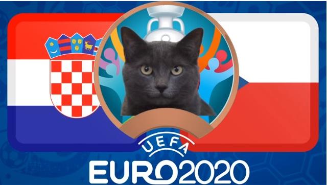 """Mèo """"tiên tri Cass"""" dự đoán tỷ số Croatia vs CH Czech - Ảnh 1."""